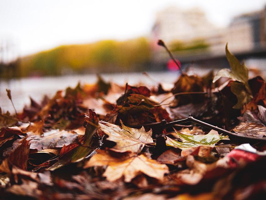 photos-exterieur-feuilles-nature
